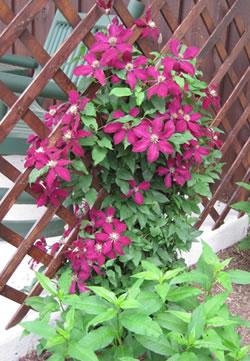 Trellis Flowers Wood We Deliver Catalog